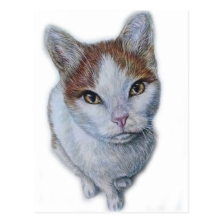 Zeichnen von Katzen-Weiß und Orange Postkarte