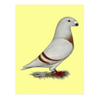 Zeigen Sie Racer rote Bar-Taube Postkarte