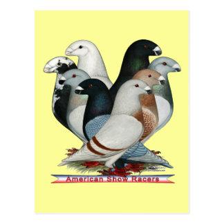 Zeigen Sie Rennläufer acht Postkarte