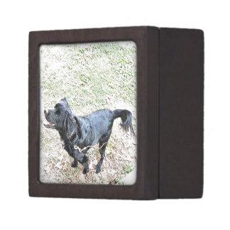 Zeit, zu gehen der Hund Schachtel