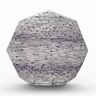 Zellen einer Wurzel unter dem Mikroskop Acryl Auszeichnung