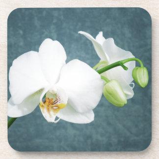 Zen-weiße Orchideen-Blume Untersetzer