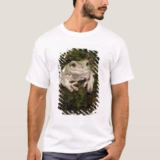 Zentrales PA, USA, White's Treefrog; Litoria T-Shirt