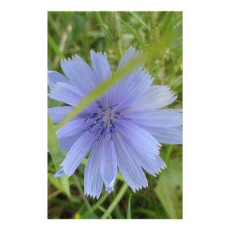 Zichorie-blaue lila Blume mit Blumen Briefpapier