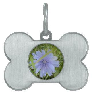 Zichorie-blaue lila Blume mit Blumen Tiermarke