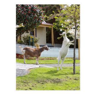 Ziege, die vom Baum isst Postkarte