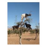 Ziegen im Arganbaum Postkarten