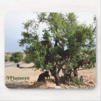 Ziegen in den Bäumen - Argan-Bäume, Marokko Mauspad