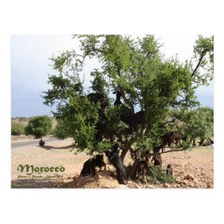 Ziegen in den Bäumen - Argan-Bäume, Marokko Postkarte