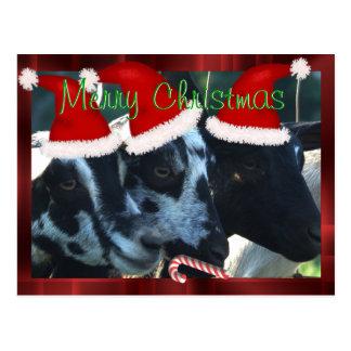 Ziegen-Kinderweihnachtspostkarte kann Postkarte