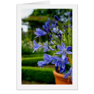 Ziergarten-Blume im Topf - Blau - leeres Auto Karte