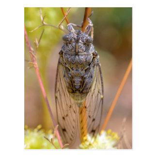 Zikade auf Stamm Postkarte