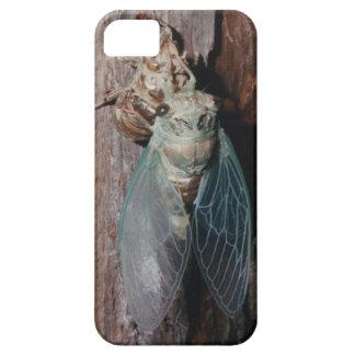 Zikade trocknet seine Flügel Schutzhülle Fürs iPhone 5