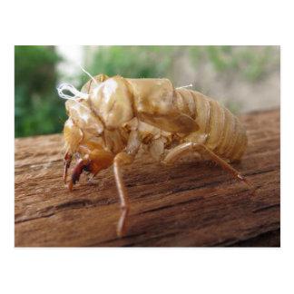 Zikaden-Muschel Postkarte