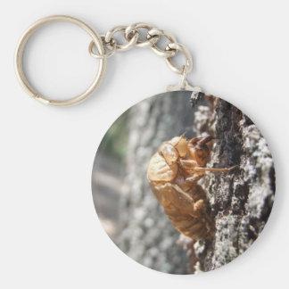 Zikaden-Muschel-Schlüsselring Schlüsselanhänger