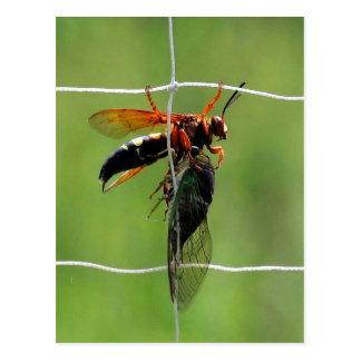 Zikadenmörderwespe, die tote Zikade hält Postkarte