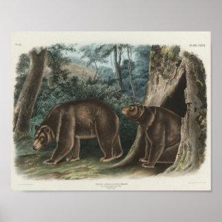 Zimt-Bär durch John James Audubon Poster