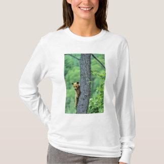 Zimt farbiger schwarzer Bär im Baum herein T-Shirt