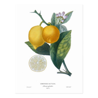 Zitrone durch Pierre - Antoine Poiteau Postkarte