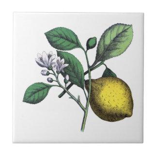 Zitrone, Frucht und Blume Kleine Quadratische Fliese
