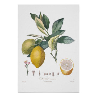 Zitrone Poster