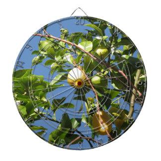 Zitrone trägt Früchte, hängend am Baum gegen den Dartscheibe