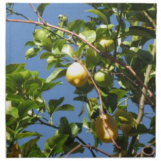 Zitrone trägt Früchte, hängend am Baum gegen den Serviette