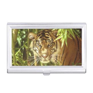 Zoo Kaliforniens, San Francisco, Sumatran Tiger Visitenkarten Dose