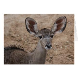 Zoo-Reihe, Baby-Antilope mit den großen Ohren Karte