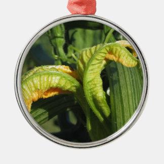 Zucchini-Pflanze in der Blüte im Gemüsegarten Silbernes Ornament