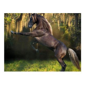 Züchtung von Stallion Postkarten