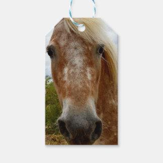 Zuckern Sie das Appaloosa-Pferd, _ Geschenkanhänger