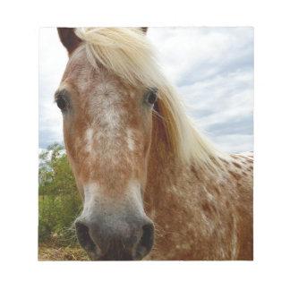 Zuckern Sie das Appaloosa-Pferd, _ Notizblock