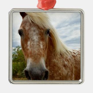 Zuckern Sie das Appaloosa-Pferd, _ Silbernes Ornament