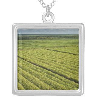 Zuckerrohr-Plantagen, Guyana Versilberte Kette