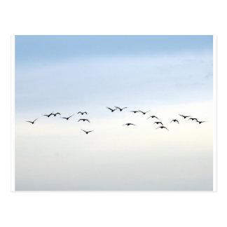 Zugvögel Postkarte