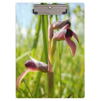 Zunge-Orchideen-Klemmbrett Klemmbrett