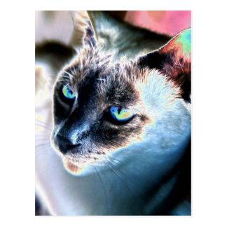 Zurückhaltende siamesische Katzen-geänderte Postkarte