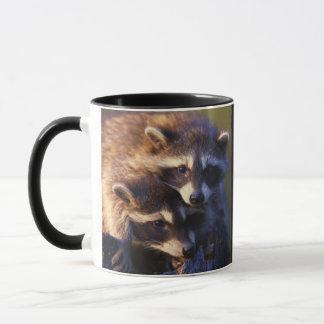 Zusammen für immer Waschbären Tasse