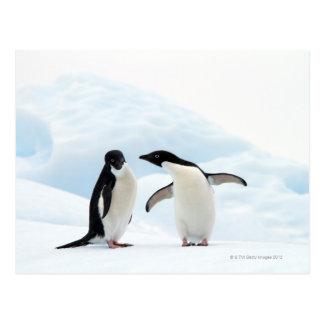 Zwei Adelie-Pinguine, die auf einem Blatt des Eise Postkarten