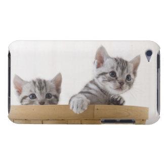 Zwei Amerikaner Shorthair Kätzchen iPod Touch Hülle