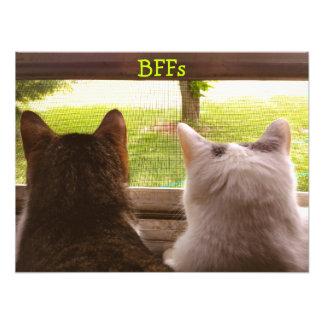 Zwei BESTE FREUNDIN Katzen, die aus dem Kunstphotos