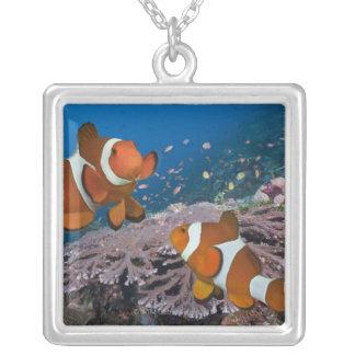 Zwei Clownfish Versilberte Kette