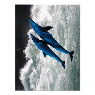 Zwei Delphine, die in Meer schwimmen Photos