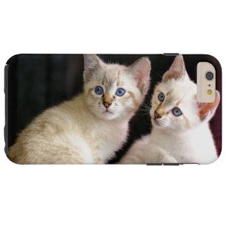 Zwei der Mekong Bobtail Tabby-Punkt-Kätzchen Tough iPhone 6 Plus Hülle