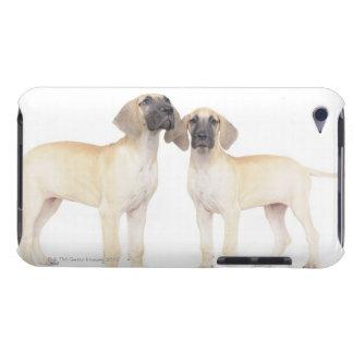Zwei Deutsche Doggen iPod Touch Etuis