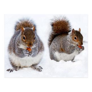Zwei Eichhörnchen-beschäftigte Essennüsse Postkarten