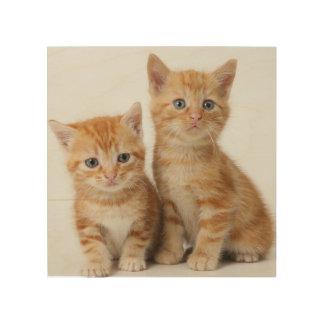 Zwei entzückende Kätzchen Holzwanddeko