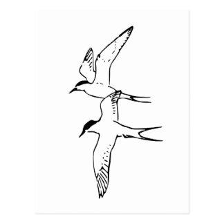Zwei fliegende arktische Seeschwalben Postkarte