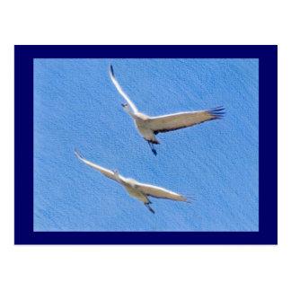Zwei fliegende sandhill Kräne Postkarte